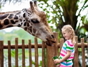 Child with giraffe at the zoo